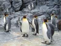 ペンギン写真