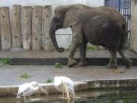 ゾウ&ペリカン写真