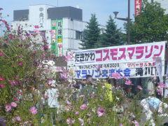 たきかわコスモスマラソン2008