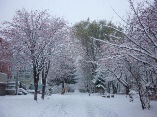 初冬の白石サイクリングロード風景