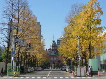 北3条通いちょう並木・道庁赤れんが庁舎
